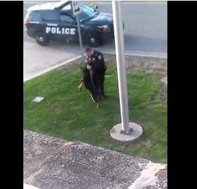 The officer is trying to pull a ball out of his K9's mouth